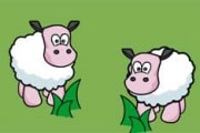 pecorell