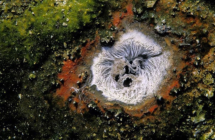 xog-volcano_290_128k