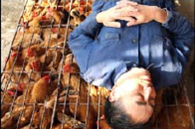 Quanto uccide l'aviaria?