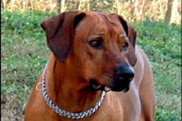 Carezze a rischio per i padroni dei cani