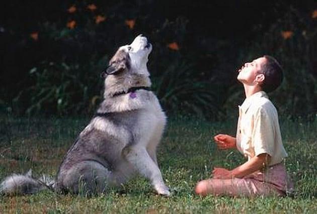 Sai riconoscere il linguaggio dei cani?