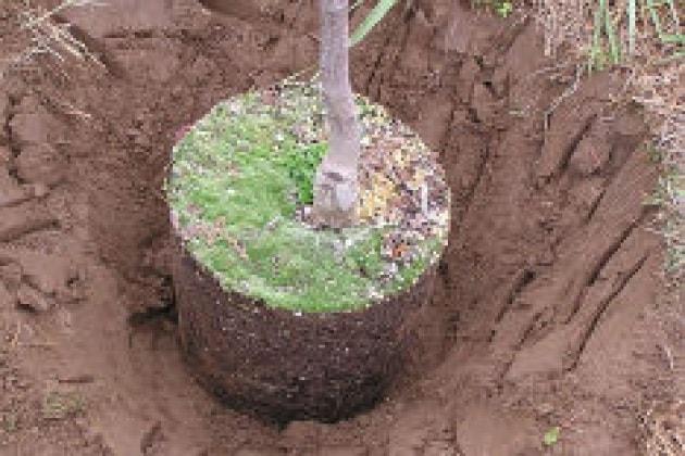 Fai una cosa giusta: pianta un albero