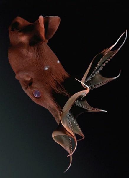 calamaro-vampiro