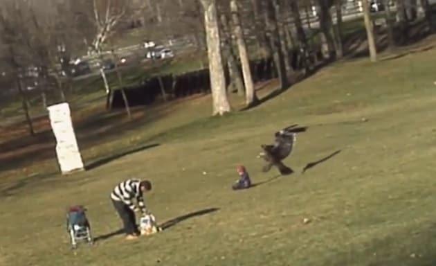 L'aquila al parco attacca un bambino