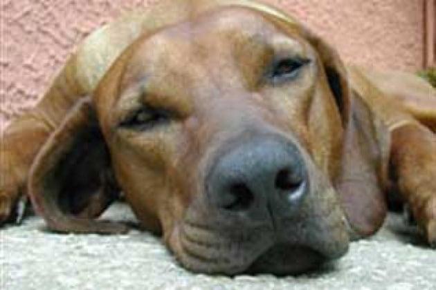 Un carattere da cani