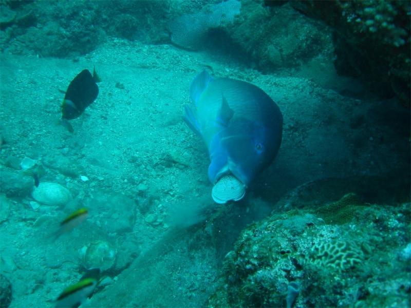 fish-d
