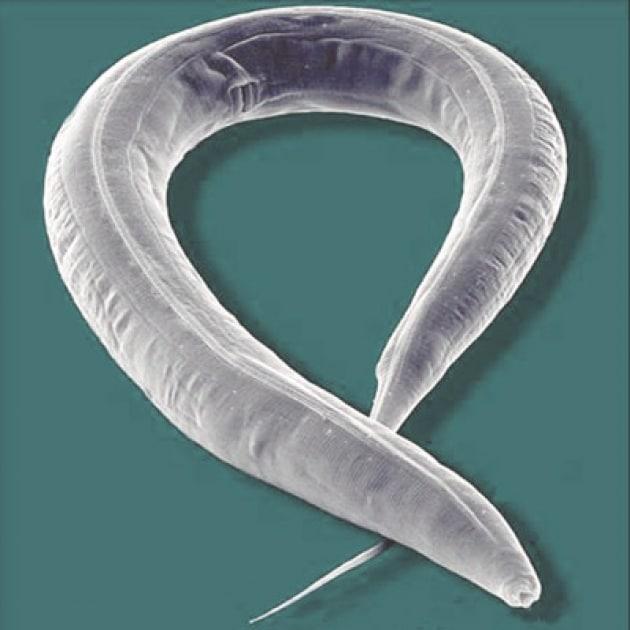 La lunga vita dei vermi nello Spazio