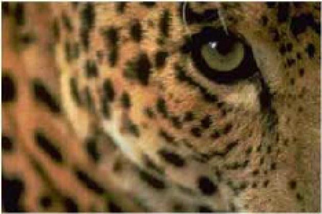 Come vedono gli animali?