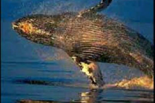 Come fanno i mammiferi marini a bere?