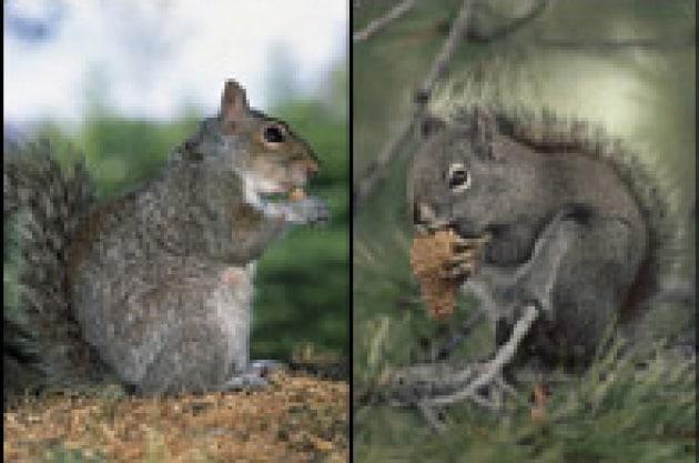 Per fare una foresta ci vuole uno scoiattolo
