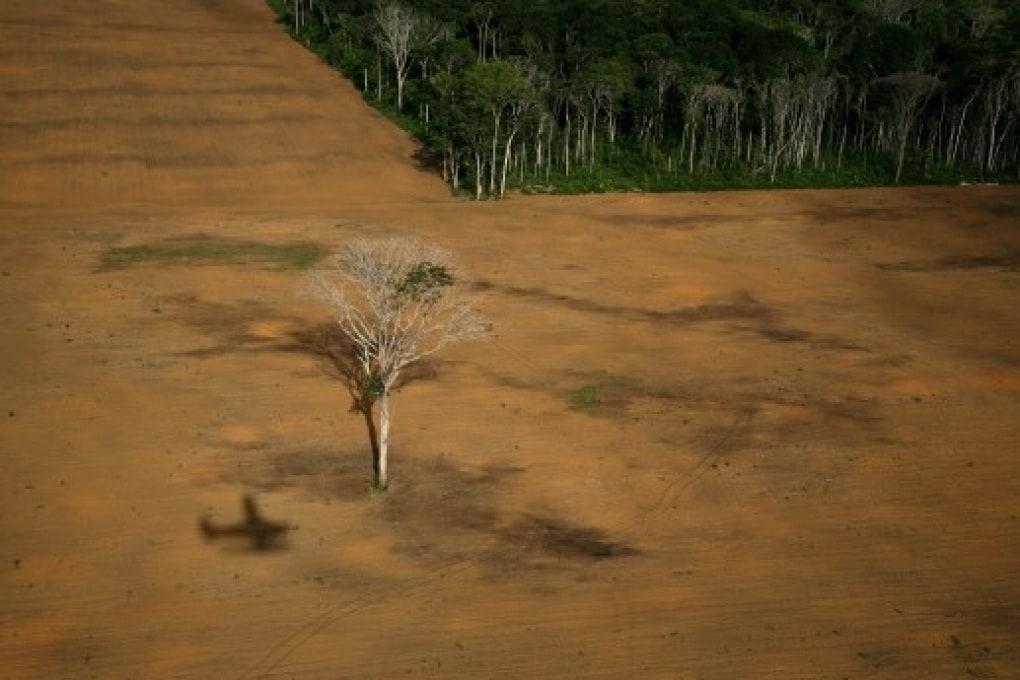 Per stare freschi ci vuole un albero tropicale