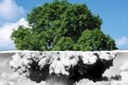 albero_318x212