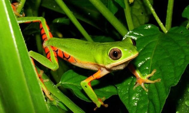 In Brasile i più curiosi animali in pericolo
