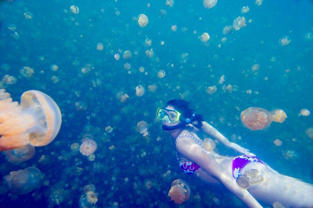 Anche le meduse inquinano
