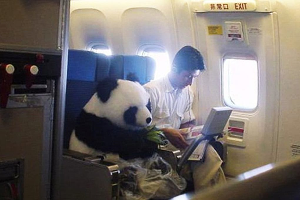 La bufala del panda in business class