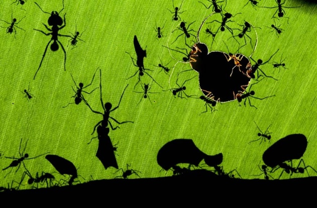 Natura selvaggia, i 5 scatti più spettacolari