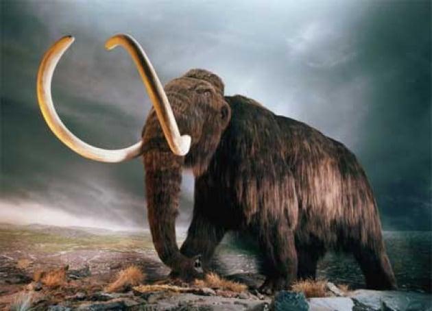Dallo sterco preistorico nuovi indizi sull'estinzione dei mammut
