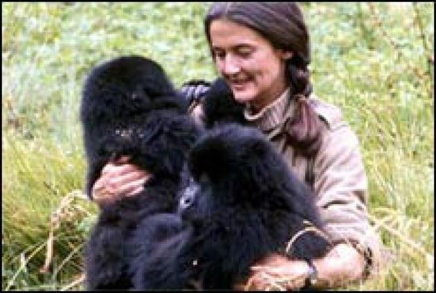 Una vita per i gorilla