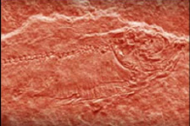 Sensazionale: scoperto il primo marziano. È un animale acquatico.