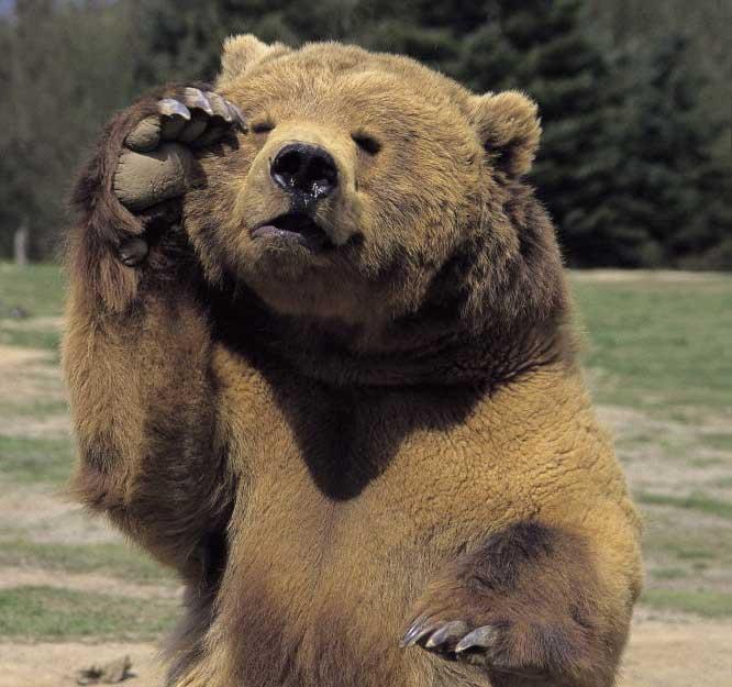 Tutto sugli orsi - Immagini di orsi da colorare in ...