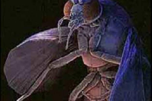 Come fanno le mosche a camminare sui vetri senza scivolare?