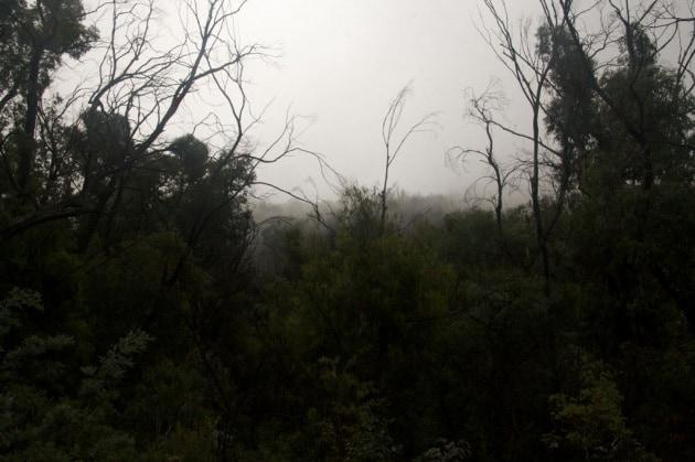 Che cosa uccide gli alberi?