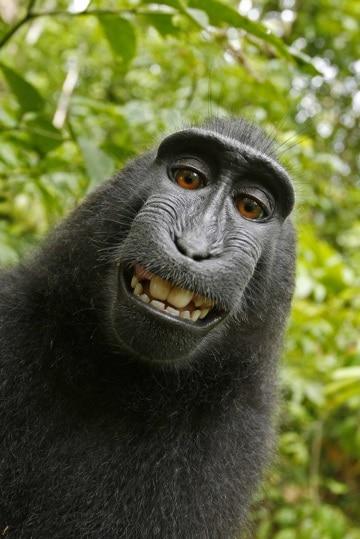 Cheese! I più contagiosi sorrisi animali