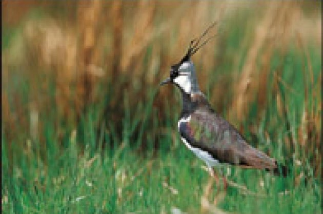 Agricoltura contro uccelli