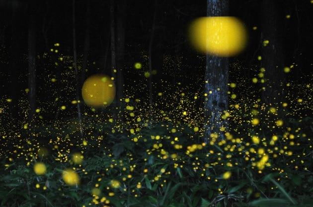Hiramatsu Tsuneaki: l'uomo che dipinge con le lucciole