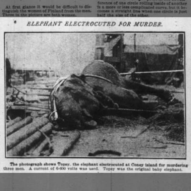 4 gennaio 1903 edison frigge un elefante per provare le for Sedia elettrica edison