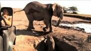 babyelefante