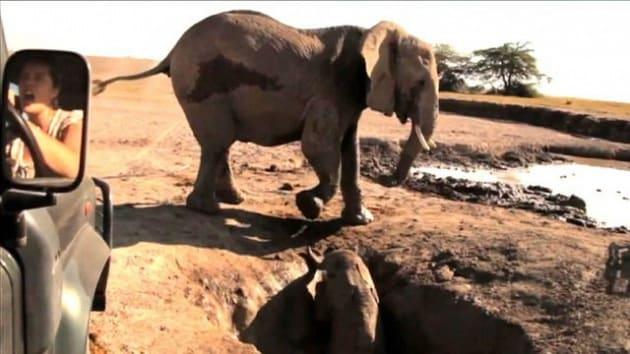 Il salvataggio all'ultimo respiro di un baby elefante