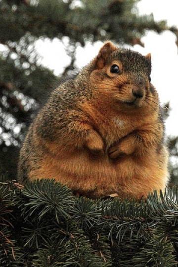 scoiattolo5_64k