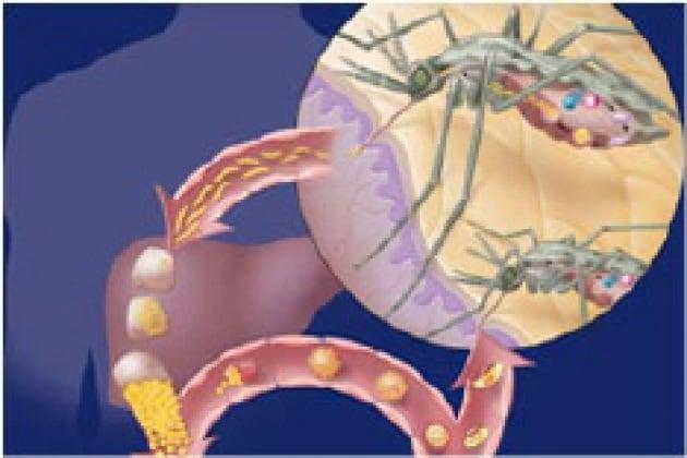 Malaria all'attacco