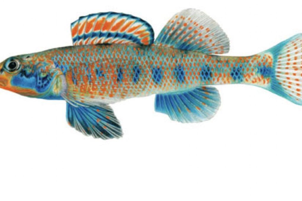 Un pesce di nome Obama