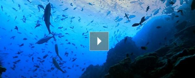 Salviamo gli oceani