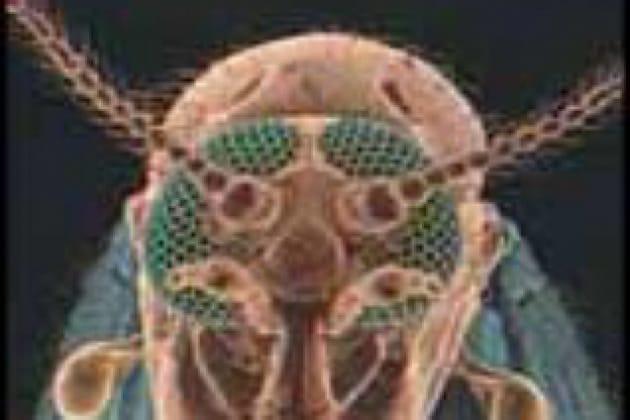 Come nascono i moscerini?