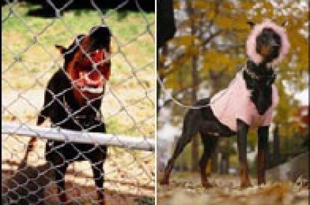 Il valium per cani
