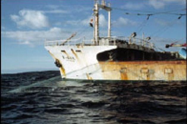 Il triste destino delle pescherie