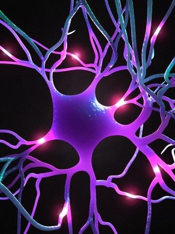 Dove si trovano i ricordi nel cervello?