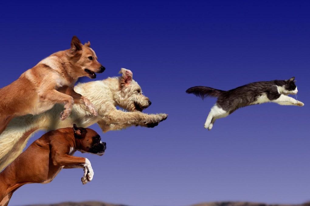 Meglio il cane o il gatto? La gara continua...