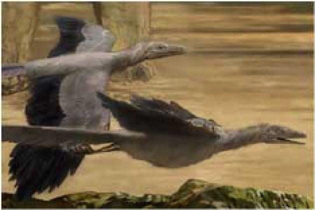 Dai dinosauri agli uccelli