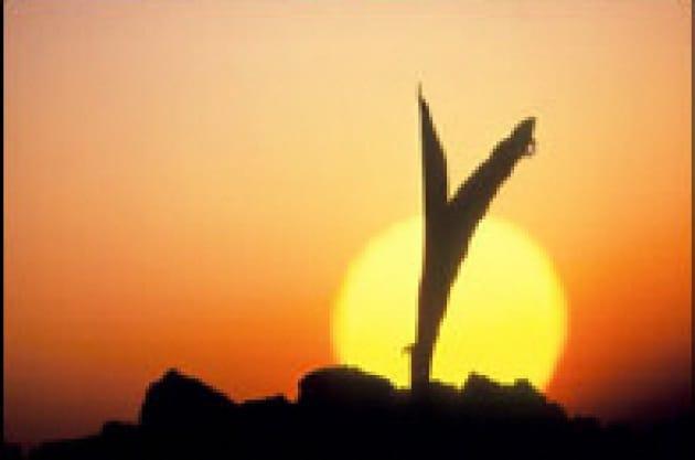 Il mais ha (forse) 9000 anni