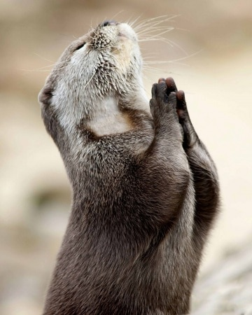 2012_02_the_praying_otter-002copia.630x3