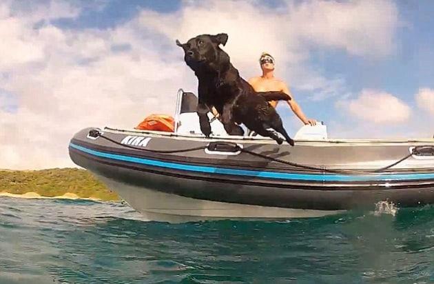 Il cane che nuota insieme ai delfini