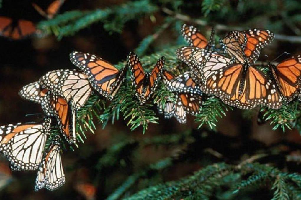 Navigatore satellitare per farfalle