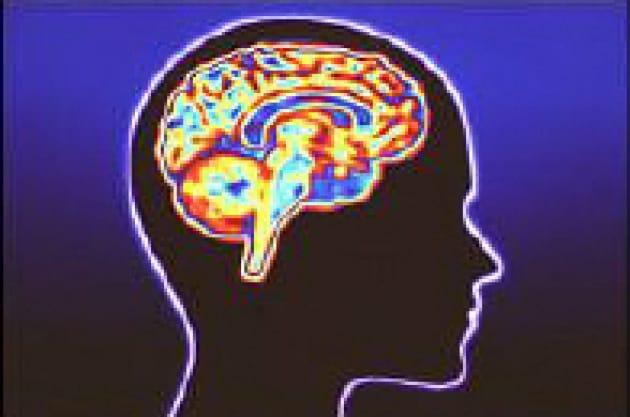 Come si costruisce il cervello