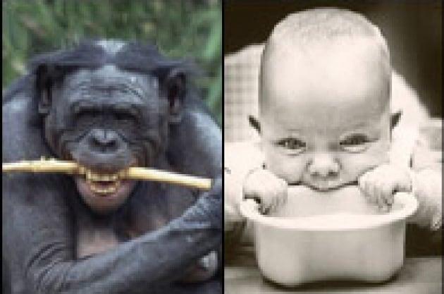 Un morso alla teoria dell'evoluzione umana