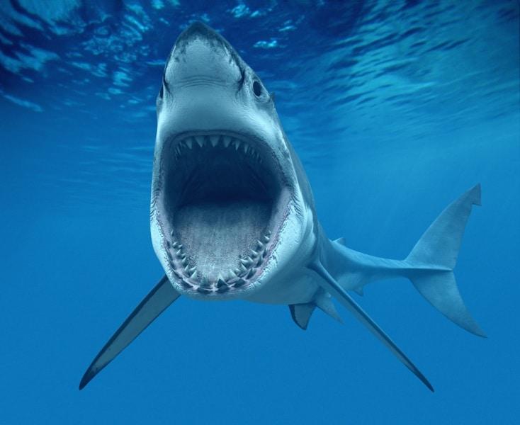 più pesce in mare incontri Collegare il telefono Koodo