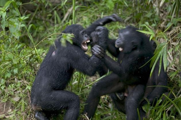 Guerra e pace tra gli animali